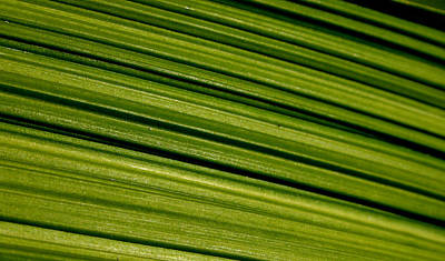 Photograph - Green Lines by Brad Scott