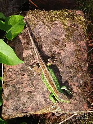 Photograph - Green Lizard #3 by Jasna Dragun
