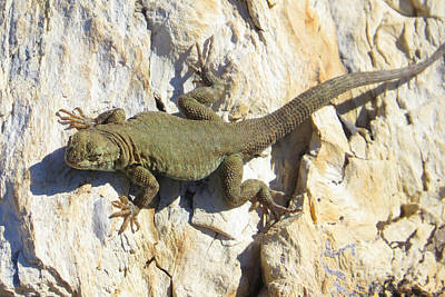 Photograph - Green Lizard by Frank Townsley