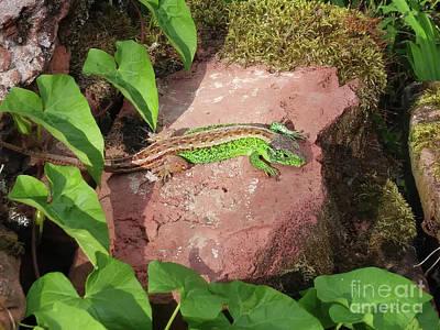 Photograph - Green Lizard by Jasna Dragun
