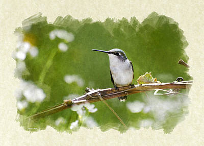 Mixed Media - Green Meadow Hummingbird Blank Note Card by Christina Rollo