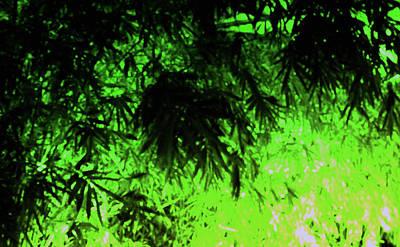 Photograph - Green Medley by Nicholas Blackwell