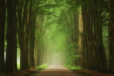 Green Forest Photograph - Green Mist by Martin Podt