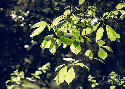 Photograph - Green Mood 2 by Andrea Anderegg