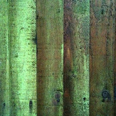 Photograph - Green Mood by Anne Kotan