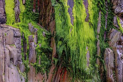 Photograph - Green Moss Hanging On Rocks At Gueirua Beach by Judith Barath