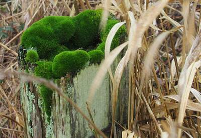 Photograph - Green Moss In Old Post by Karen Molenaar Terrell