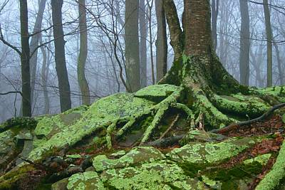 Photograph - Green Moss On A Foggy Day by Polly Castor
