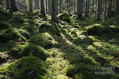 Photograph - Green Mossy Backlit Forest by Kennerth and Birgitta Kullman