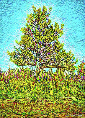 Digital Art - Green Mountain Pine - Tree In Boulder County Colorado by Joel Bruce Wallach