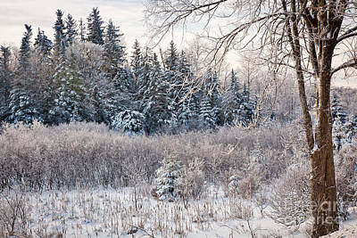 Green Mountain  Winter Morning Art Print by Susan Cole Kelly