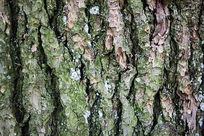 Gree Digital Art - Green Oak Moss by Billy Soden