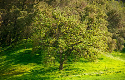 Photograph - Green Oak Tree And Grasses by Connie Cooper-Edwards