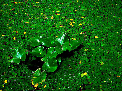 Green On Green Art Print by Ron Plasencia