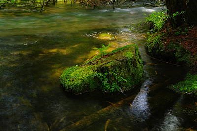 Green On The River Art Print by Jeff Swan