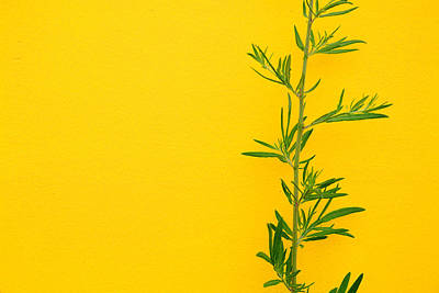 Photograph - Green On Yellow 5 by Art Ferrier