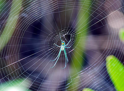 Photograph - Green Orchard Spider by Kenneth Albin