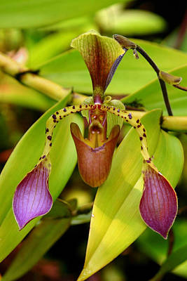 Photograph - Green Orchid  by Tony Brown