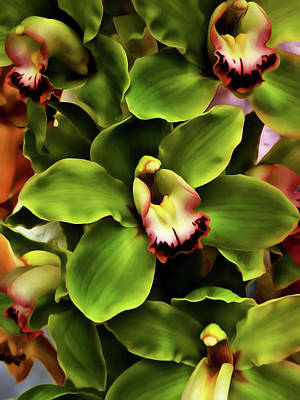 Floral Photograph - Green Orchid Wall Art by Georgiana Romanovna