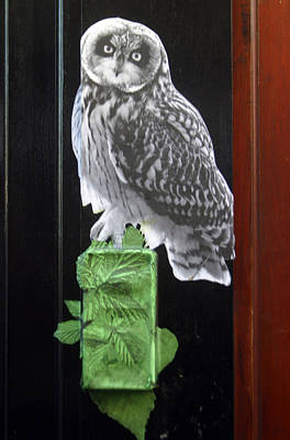 Green Owl Art Print by Jez C Self