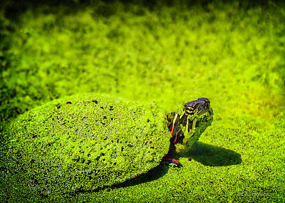 Photograph - Green Painted Turtle by LeeAnn McLaneGoetz McLaneGoetzStudioLLCcom
