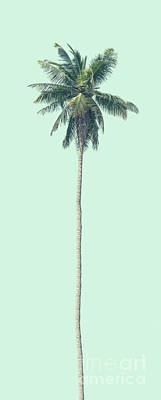Photograph - Green Palm by Andrew Paranavitana
