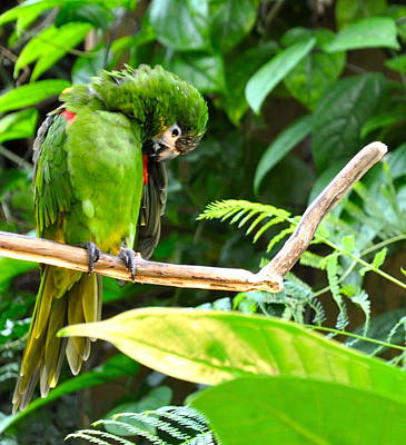 Bringing The Outdoors In - Green Parrot by Caroline Reyes-Loughrey