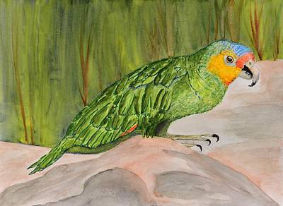 Amazon Parrot Painting - Green Parrot On A Rock by Linda Brody