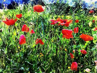 Photograph - Green Pasture With Red Poppies by Dorothy Berry-Lound