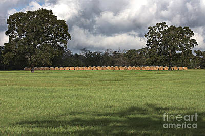 Photograph - Green Pastures by Ella Kaye Dickey