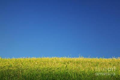 Green Pastures IIi Art Print