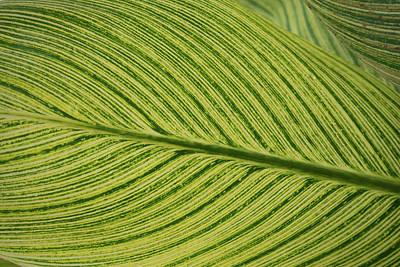 Photograph - Green Pattern 3 by Douglas Barnett