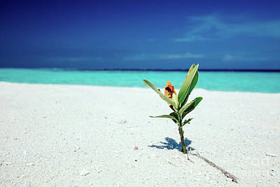 Photograph - Green Plant Standing In The Beach Sand. by Michal Bednarek