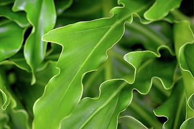 Green Plant Art Print by Tamra Lockard