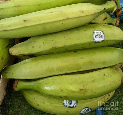 Photograph - Green Plantains by Mudiama Kammoh