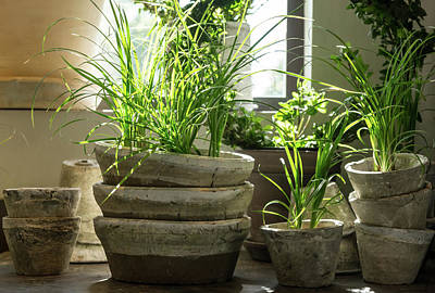 Ceramics Photograph - Green Plants In Old Clay Pots by GoodMood Art