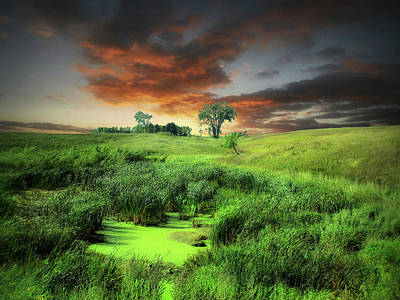 Photograph - Green Pond by William Tanata