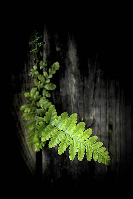 Photograph - Green Power by Philippe Sainte-Laudy