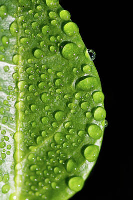 Photograph - Green Rain Drops by Crystal Wightman