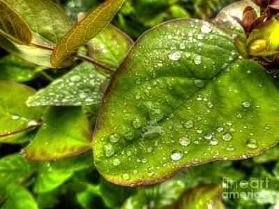 Pasta Al Dente - Green Raindrops by Vicki Spindler