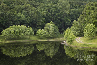 Photograph - Green Reflections by Andrea Silies