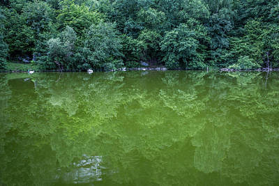 Photograph - green reflections at the Tanzteich, Harz by Andreas Levi