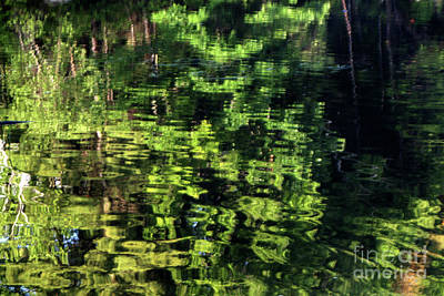 Photograph - Green Reflections by Katia Weyher