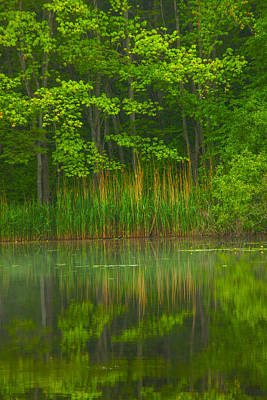 Connecticut Landscape Photograph - Green Reflects by Karol Livote