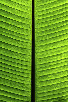 Photograph - Green Ribs by Christopher Holmes