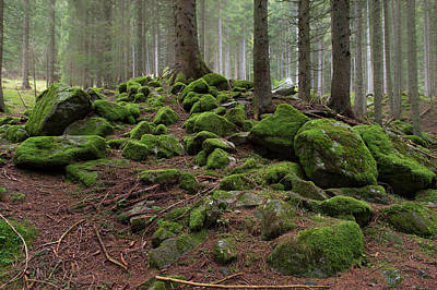 Photograph - Green Rock Forest by Wim Slootweg