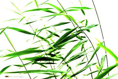 Photograph - Green Rush by Michael Mogensen