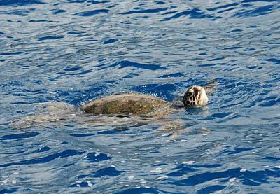 Green Sea Turtle Photograph - Green Sea Turtle 2 by Michael Peychich