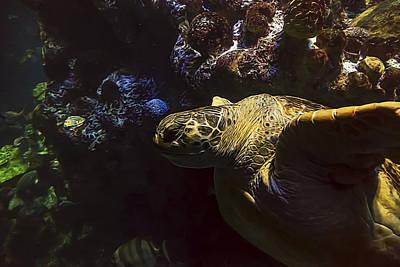 Green Sea Turtle Photograph - Green Sea Turtle 4 by Janet Fikar