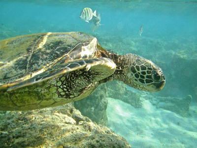 Green Sea Turtle Photograph - Green Sea Turtle 4 by Michael Peychich